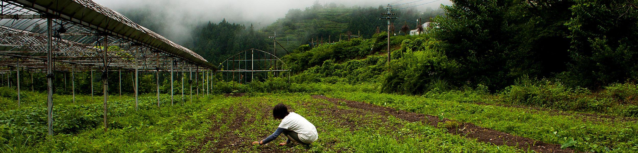 Narumi Farm