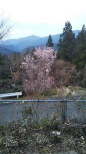 春の新しいはじまり